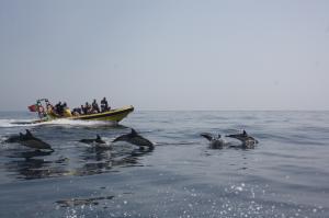 dolfijnen boot tocht