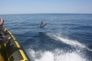 dolfijnen albufeira